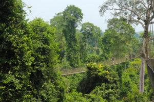 Rainforest in Kakum National Park
